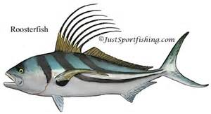 Roosterfish illustration