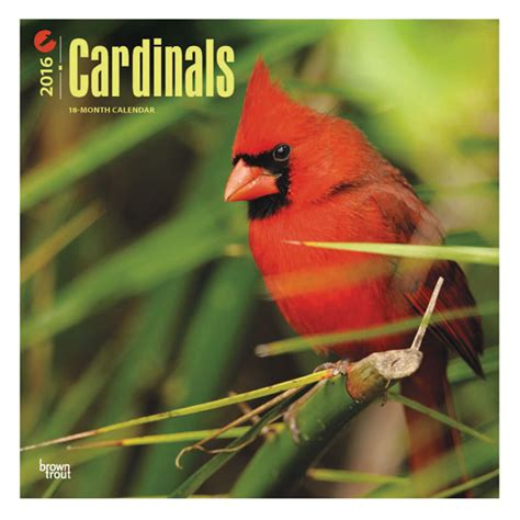Cardinal Calendars Cardinal Calendar 2015 Wall Calendar Calendars
