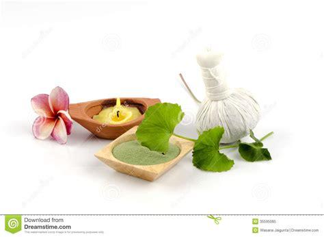 Green Tea Scrub Beau Spa Treatment spa scrub with green tea and centella asiatica to wrinkles stock image image 35595085