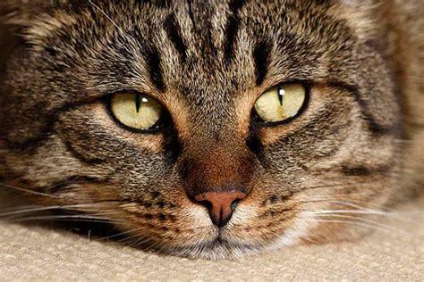 was tun wenn die katze in die wohnung pinkelt katze frisst nicht ursachen und vorgehensweise