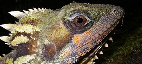 all tropical rainforests animals search results insectanatomy wildlife of australia s rainforests