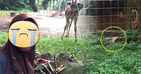 menyesal bercuti   sedih tengok zoo melaka