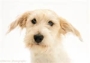 Dog Mongrel Dog Photo Wp38797