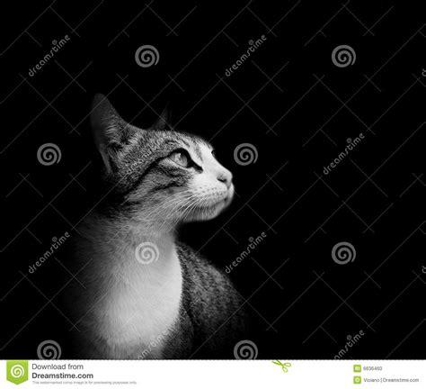 Black Lovely Cat lovely cat in black background stock photo image 6636460