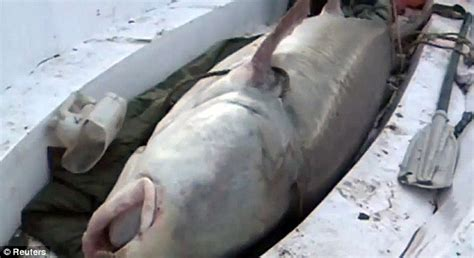 the biggest boat in the whole world that s quite a catch giant sturgeon weighing half a ton