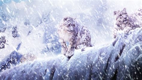 macbook pro 1 1 snow leopard mac os x snow leopard wallpaper hd 60 images