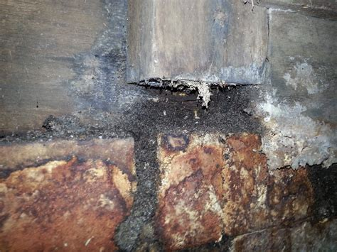 Landscape Timbers Termites How To Tell If You Termites Scenic Pest Management