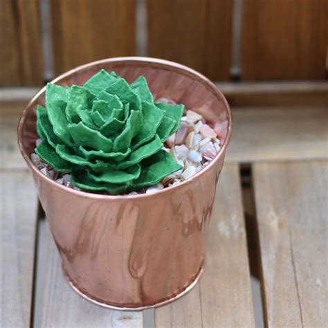 upcycle egg cartons upcycle egg succulent
