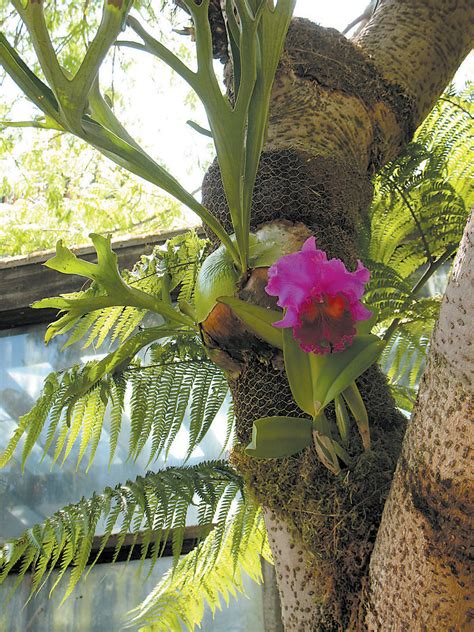 pacific horticulture society a tropical with a mission