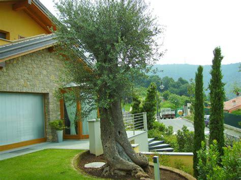 giardino con ulivo realizzazione giardini foto e progetti dei lavori realizzati