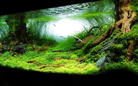 aquascape wallpaper planted aquarium aquascaping awesomeness pinterest