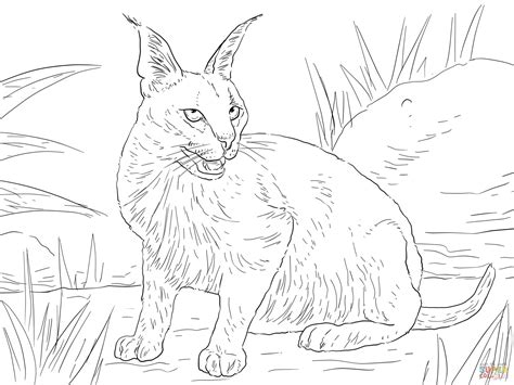 coloring pages of wild cats caracal desert wild cat coloring page free printable