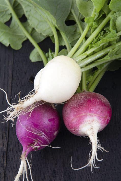 common radish varieties   types  radishes