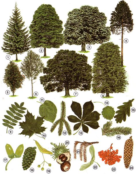 Garten Pflanzen Erkennen beton garten pflanzen erkennen