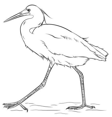 migratory birds coloring pages snow egret coloring page free printable coloring pages