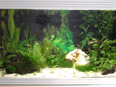 ciano aquarium design zeneo obsession 30l photos d aquarium page 141