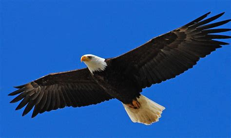 On Wings Of Eagles 1 wings of eagles christian counseling isaiah 40 31