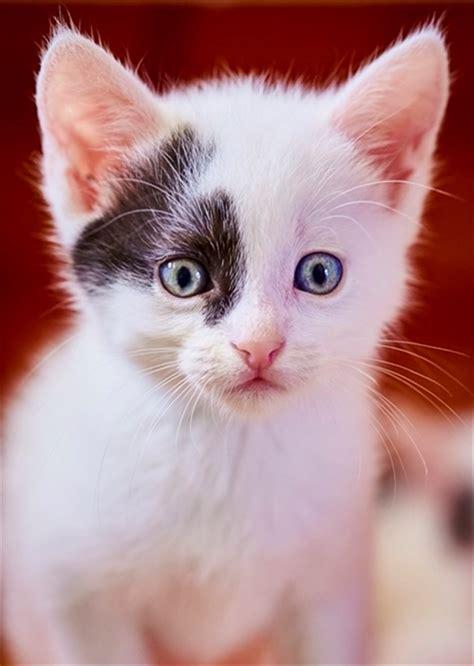 katzenbabys suchen ein zuhause katzenbabys suchen bald ein neues zuhause