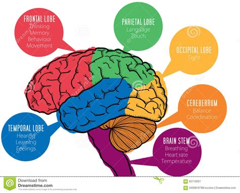 diagram and functions brain function diagram human brain anatomy human