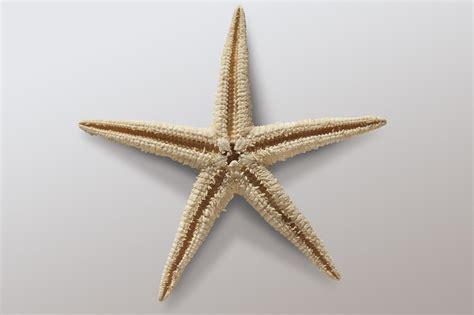 wallpaper bintang laut free photo starfish asteroidea free image on pixabay