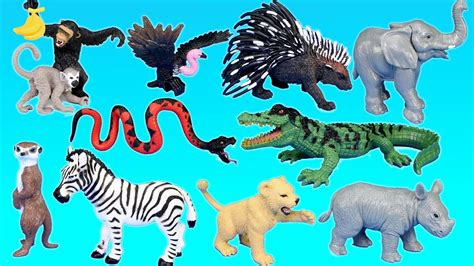let s learn about jungle animals letã s jungle adventure animals playset for animal