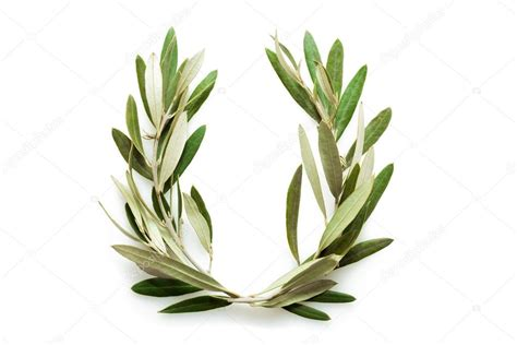 bayleaf kranz olivenbaum kranz stockfoto 47156911