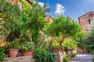 best perennials for mediterranean gardens in cool countries