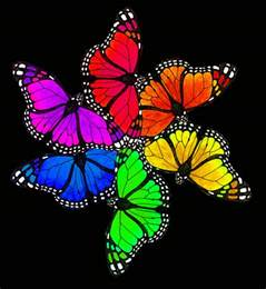 butterfly colors butterfly rainbow by luthiennightwolf on deviantart