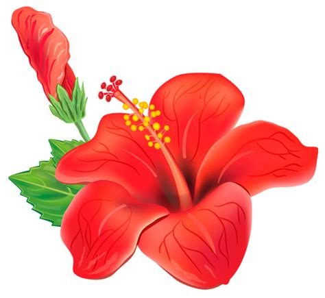 red exotic flower png clipart picture poroplast