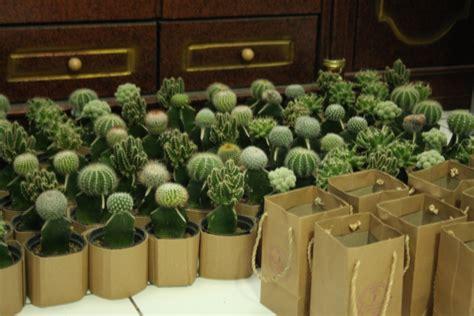 adjie kaktus  souvenir kaktus mini  kemasan