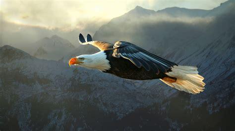 animals nature eagle bald eagle wallpapers hd desktop