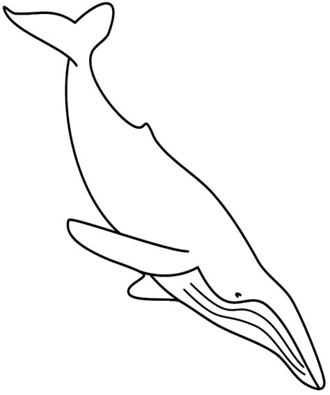 coloring page whale coloring pages whales az coloring pages