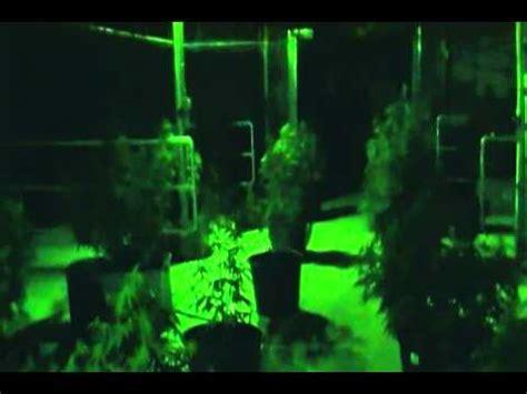grow room green lights megamarijuana