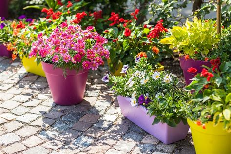 container gardening 5 perks of growing a container garden