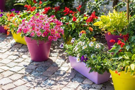 perks  growing  container garden