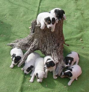 puppy imprinting puppy imprinting breeds picture