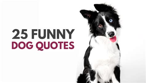puppy sayings 30 quotes puppy leaks