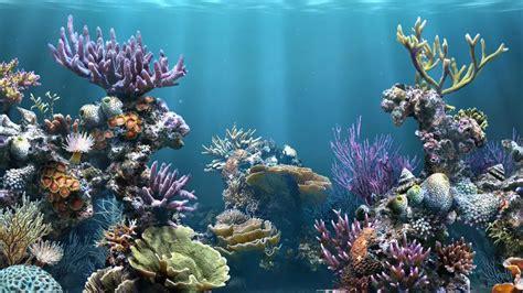 imagenes 3d jpg fondo marino 3d 1366x768 fondos de pantalla y wallpapers