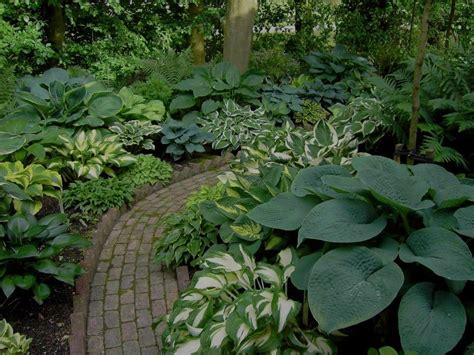 Hosta Garden Designs by This Hosta Paradise Yard