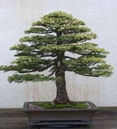 innaffiare fiori vacanza innaffiare bonsai bonsai
