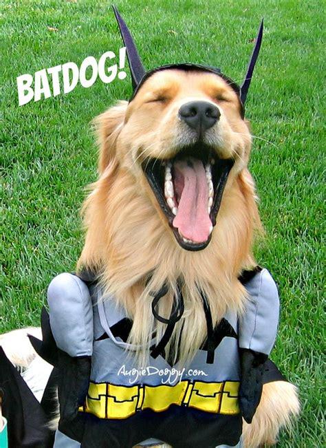 golden retriever costume for person batdog golden retrievers in costume