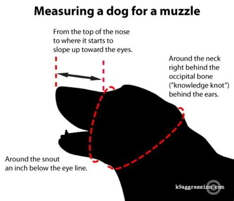 how to get a dog to use the bathroom outside controlling dog aggression by using a dog muzzle