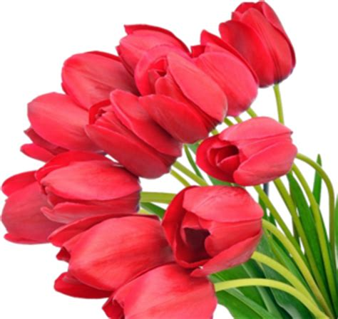 what color flowers for new year png