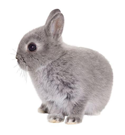 and rabbit rabbits