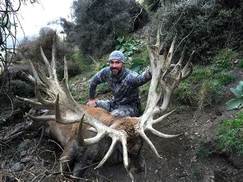 Do Deer Shed Their Antlers Every Year do deer grow new antlers every year 28 images when whitetail bucks shed their antlers advice