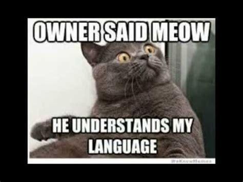 2014 Funny Memes - funny cat memes 2014 animal memes youtube