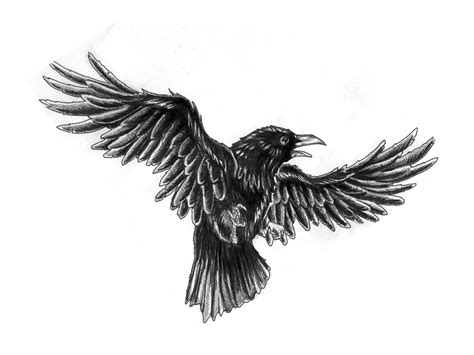 black crow tattoo sketch sketch