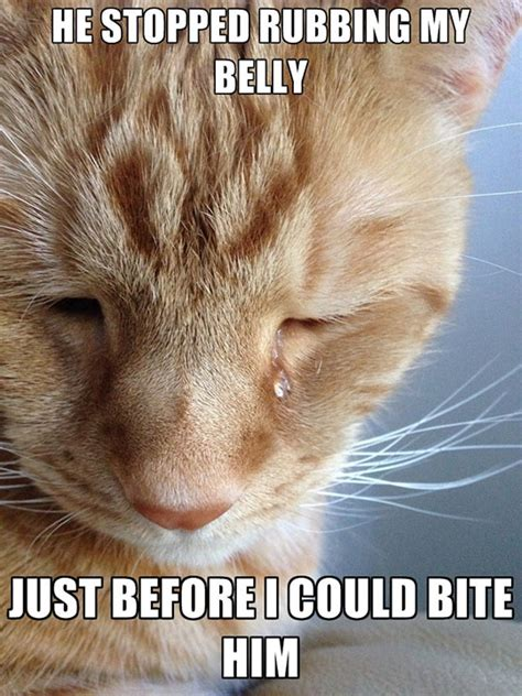 Cat Problems Meme - first world problems cat version
