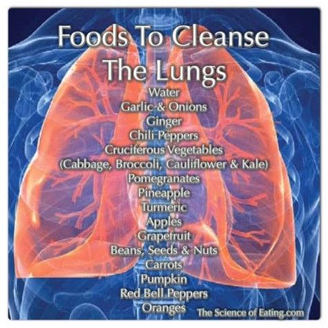 How To Detox Tobacco Damage by 25 Best Ideas About Lungs On