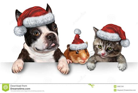 christmas pet sign royalty  stock photo cartoondealercom